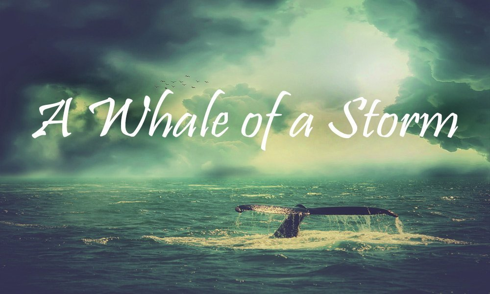 A Whale of a Storm Image